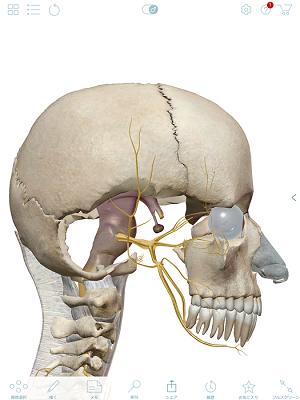 三叉神経1.png