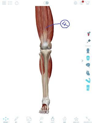 大腿四頭筋2.png