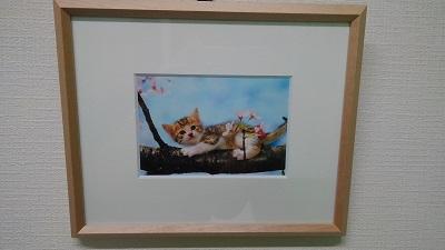 桜 猫.JPG
