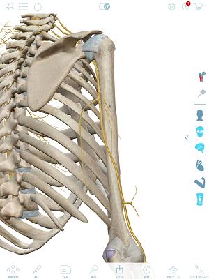 橈骨神経上腕骨2.png