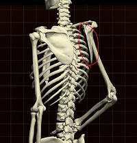 肩鎖関節1.png