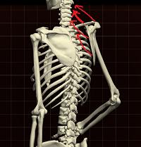 肩鎖関節4.png