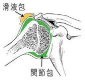 肩関節包 症状別.jpg