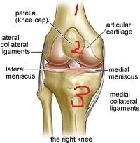 膝関節.jpg