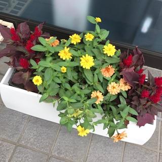 花壇.jpg