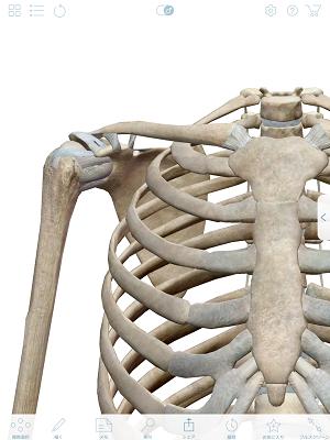 肩関節の靭帯