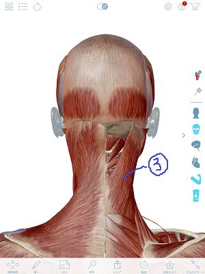 頭板状筋.PNG
