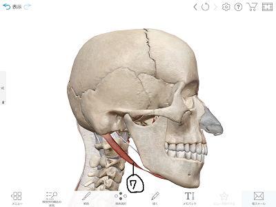 顎二腹筋2.png