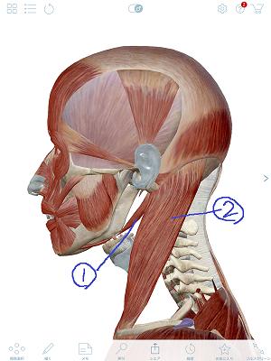顎二腹筋3.png