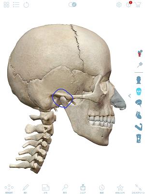 顎関節マーク付き.png