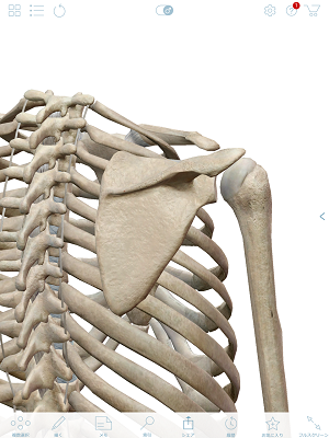 肩関節 後面